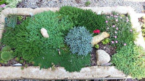 lush-growth-hypertufa-gardener