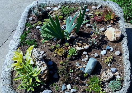 Hypertufa trough at Rock Garden