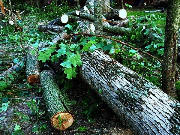 Fallen Trees White Ash - The Hypertufa Gardener
