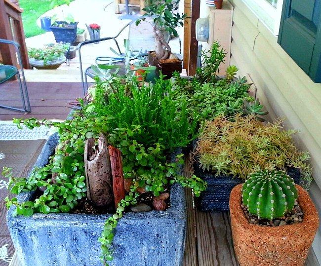 I have so many hypertufa troughs - the hypertufa gardener
