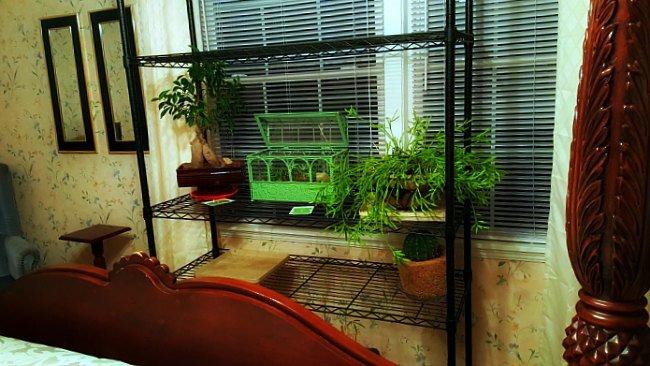 Overwintering plants - The Hypertufa Gardener