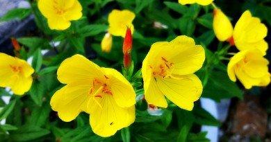 Sunday Garden Walk - The Hypertufa Gardener