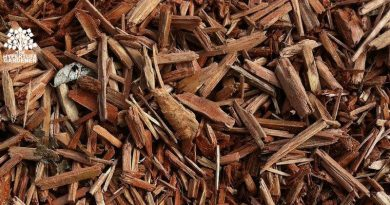Bark mulch in fall