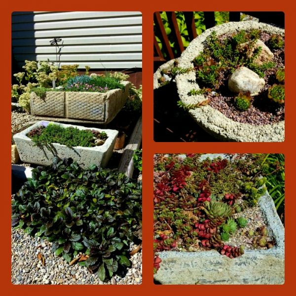 photo fall collage
