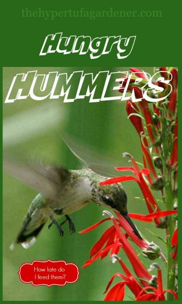 Hungry Hummers - The Hypertufa Gardener