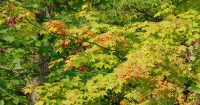 It feels like fall - the hypertufa gardener