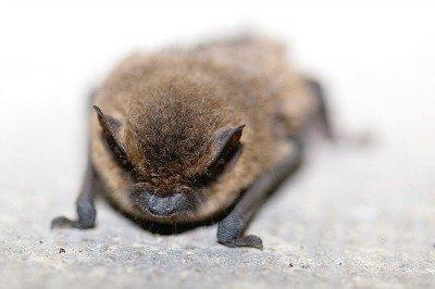 bats-pollinators-hypertufa-gardener