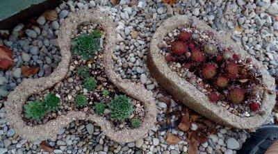 hypertufa planted with semps - The Hypertufa Gardener
