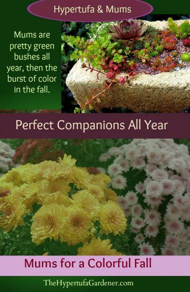 Hypertufa and Mums - The Hypertufa Gardener