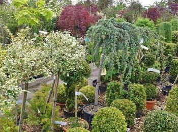 photo of plants at nursery