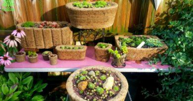 Hypertufa pots and planters