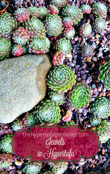 Many-jewels-in-hypertufa - The Hypertufa Gardener