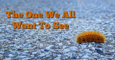 image of just orange woolly bear caterpillar