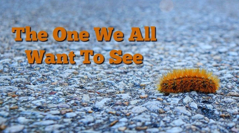 image of just orange woolly bear caterpillar