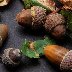 acorns-the-hypertufa-gardener