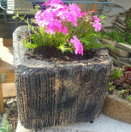 Styrofoam planter - Almost Hypertufa with Phlox-thehypertufagardener