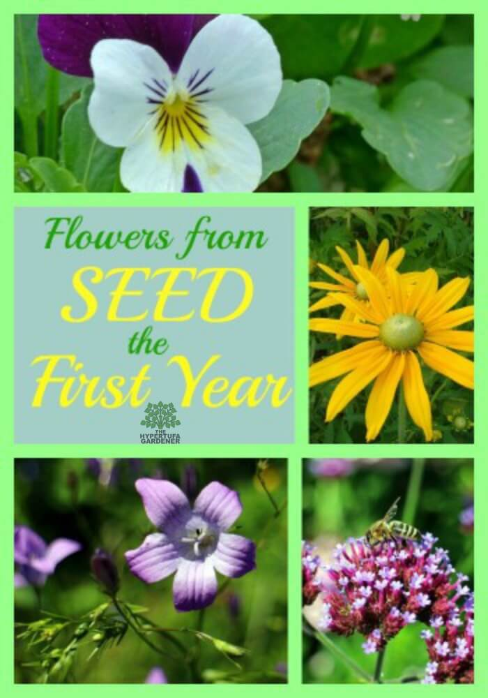 It is so nice to plant flowers from seeds and get the flowers the first season. http://www.thehypertufagardener.com/want-flowers-seeds-year/