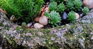 Growing Moss on Tufa - The Hypertufa Gardener
