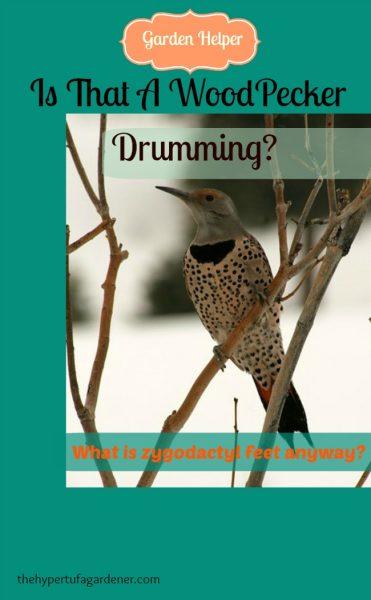 Is That A Woodpecker Drumming-The Hypertufa gardener