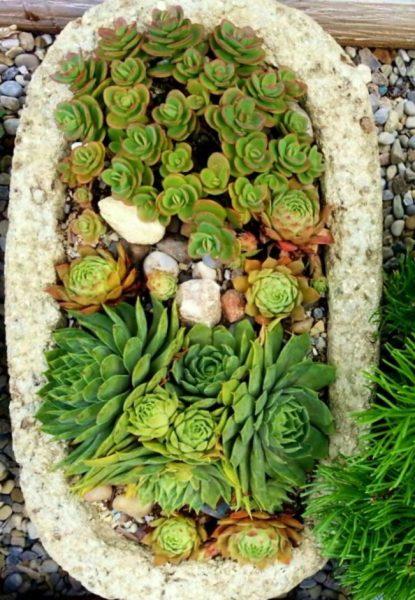 3favorite-hypertufa-gardener