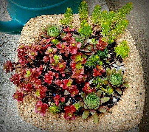 A Favorite buff colored pot