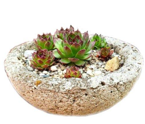image-bowl-hypertufa-gardener2