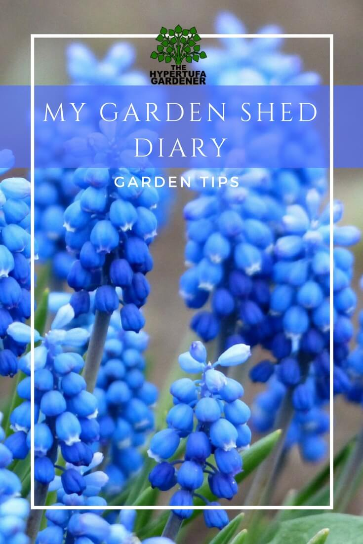 My Garden Shed diary - Garden Hints and Tips