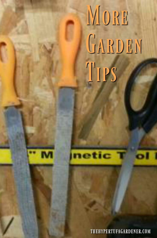More Garden Tips from My Garden diary