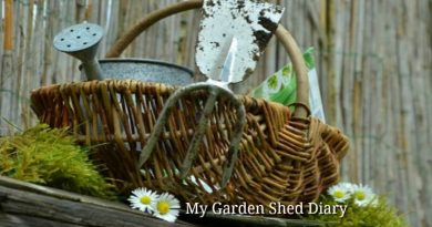 garden hints and tips