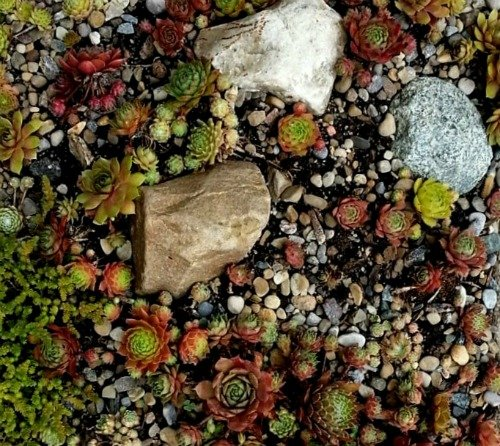Succulents - Spread them Out in Spring