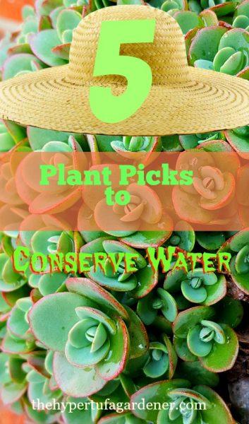 Conserving-water-hypertufa-gardener