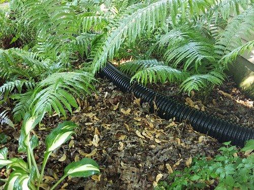 Moist area in my garden where the Elephant Ears will grow