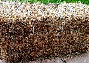 straw-bale-gardening-hypertufa-gardener