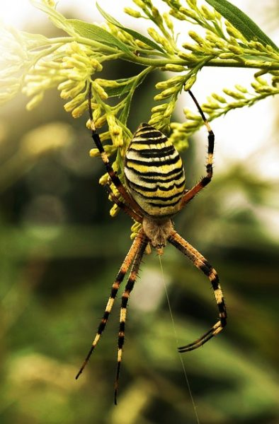 Early Morning Spider - Orb Weaver - The Hypertufa Gardener