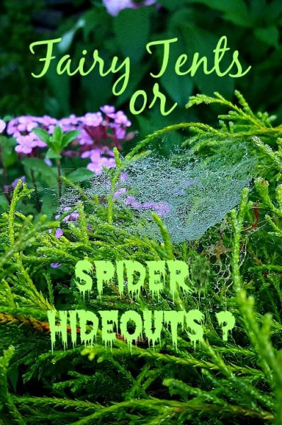 FairyTents or Spider Hideouts - The Hypertufa Gardener