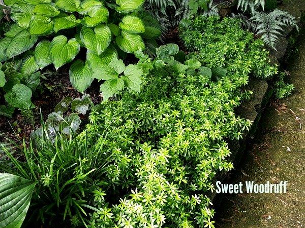 Full Shade Bed - The Hypertufa Gardener
