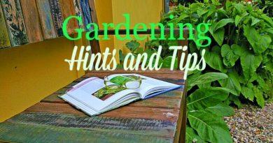 Gardening tips from The Hypertufa Gardener
