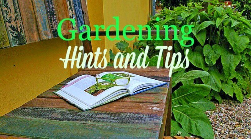 Gardening tips from The Hypertufa Gardener