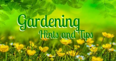 Hints and Tips- Gardening Safety
