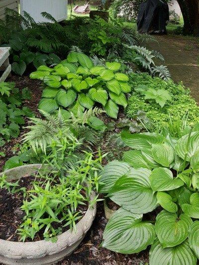 Opposite end of the shade garden -The Hypertufa Gardener