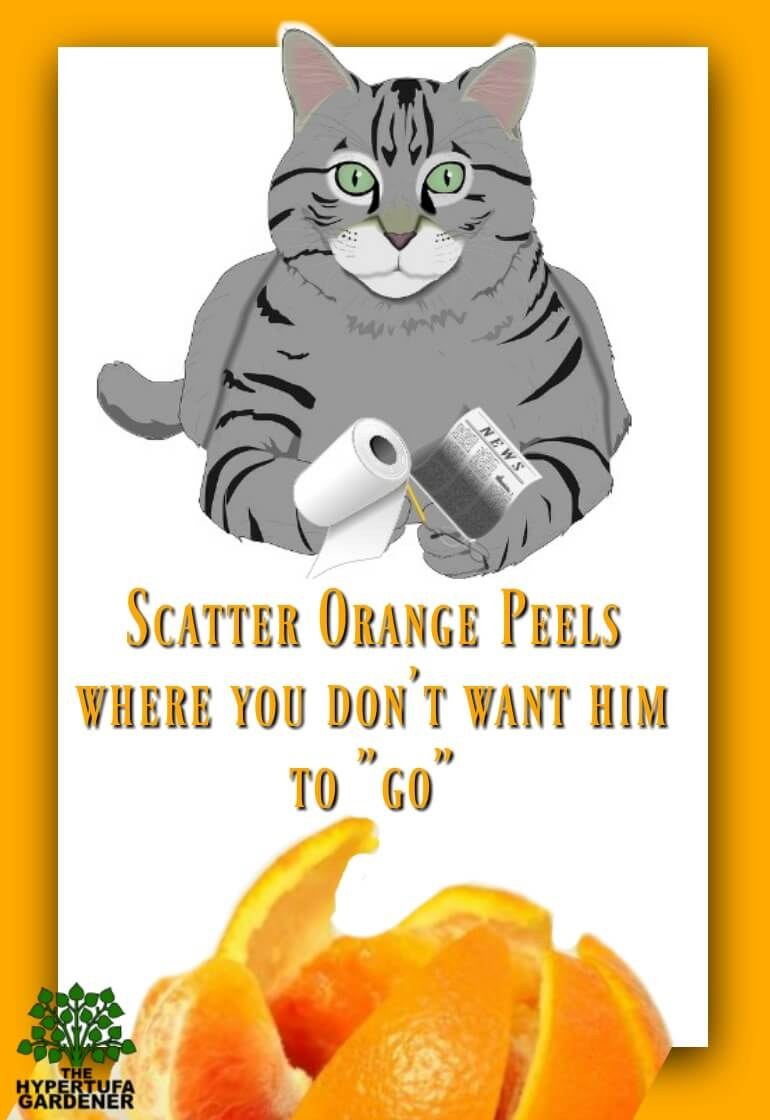 Orange peels to deter cats