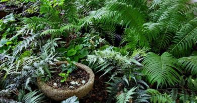 My Perennial Shade Garden – So Many Shades of Green