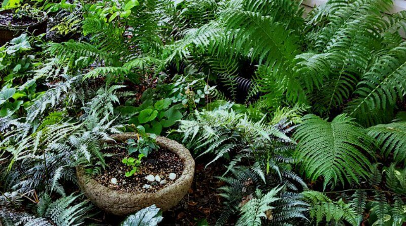 Shade-Hypertufa-Bowl-The-Hypertufa-Gardener
