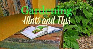 garden-bench-for hints and tips-thehypertufagardener.com