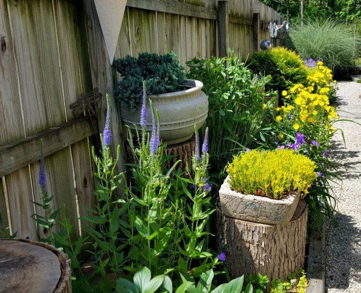 Color in The Summer Garden(1)