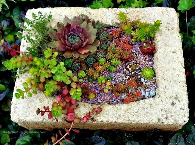 colorful-sedum-in-hypertufa-planters