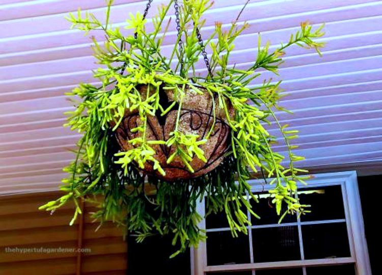 hanging-hypertufa-planters-are-great