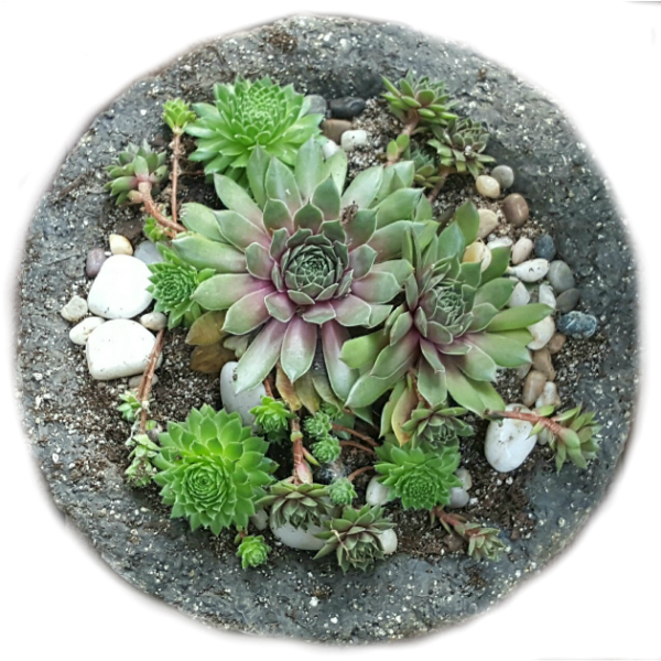 Hypertufa Bowl 2015 - The Hypertufa Gardener