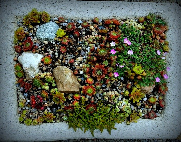 Large Hypertufa Trough - The Hypertufa Gardener