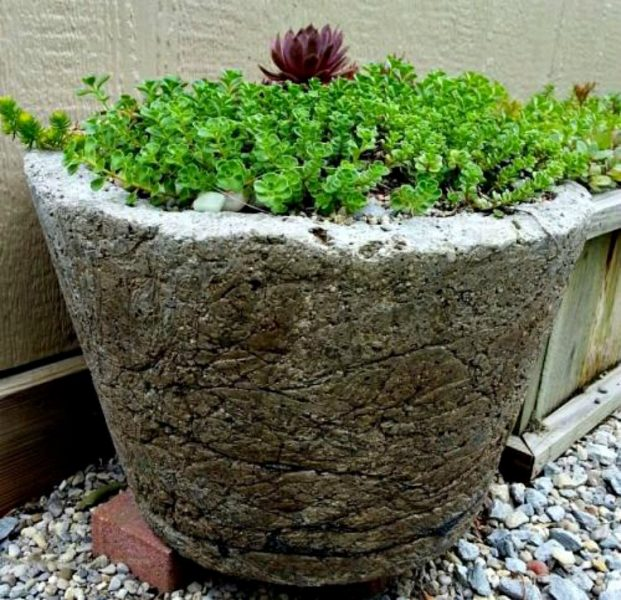 my-hypertufa-planters-the-favorites